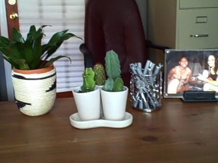 plantspenspics11